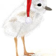 Baby Santa Plover
