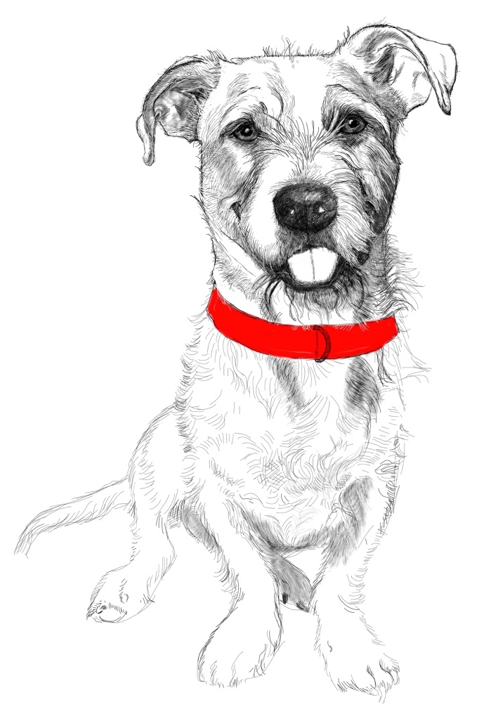This is a drawing of Heenry the dog. I met Henry in Riverside Park on the upper west side of Manhattan.