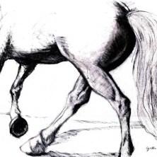 Horse1LS