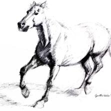 Horse3LS