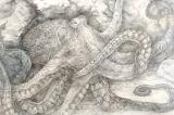 OctopusLS